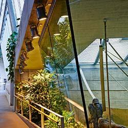 Beleuchtung im Menschenaffenhaus im Stuttgarter Zoo Wilhelma