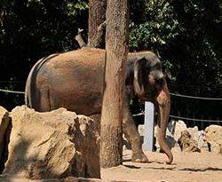 Elefanten-Außengehege in der Stuttgarter Wilhelma