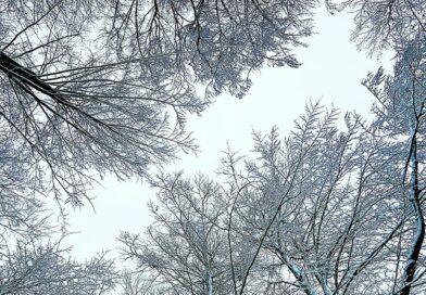 Wie hoch dürfen Bäume im Garten eigentlich sein?